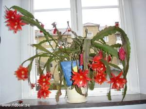 Blommor i fönstret