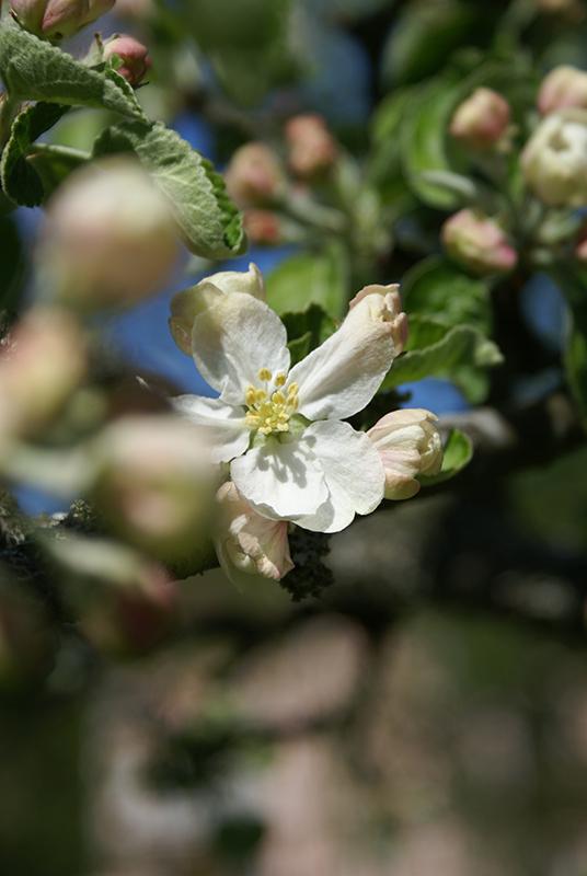 ensam-blomma_2508937459_o
