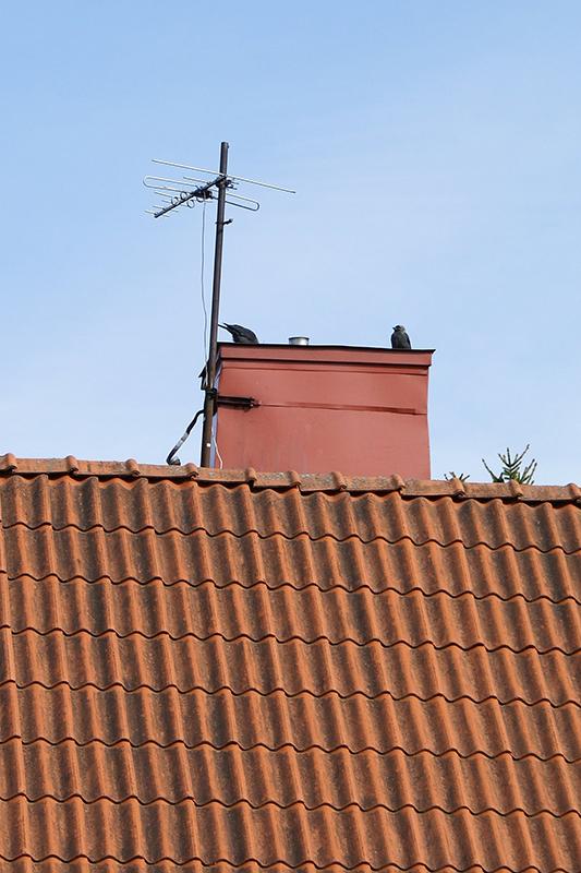kajor i grannens skorsten