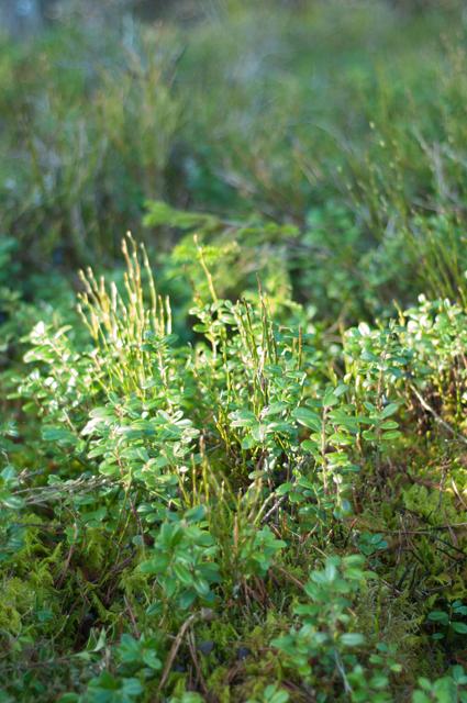 skogen4