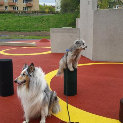 Att försöka fotografera hundar