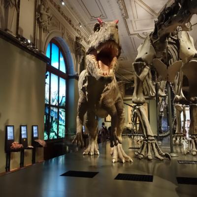 Dinosaurier och meteoriter