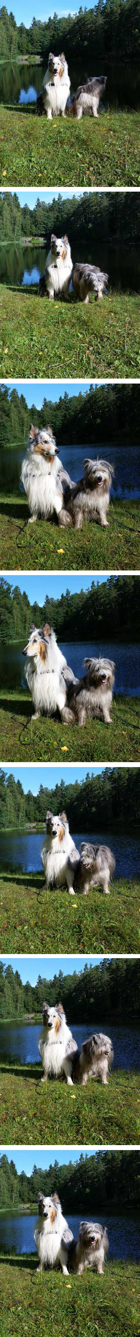 hundfotografering