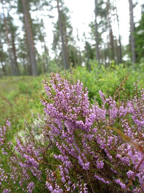skogen-4