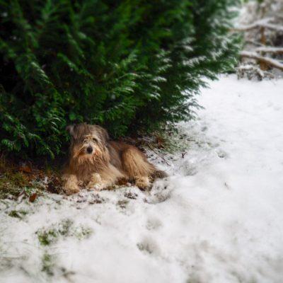Det kom snö