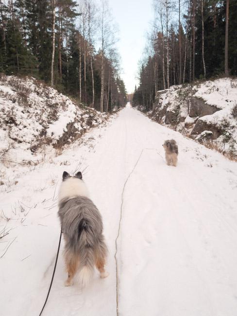 hundprom-33