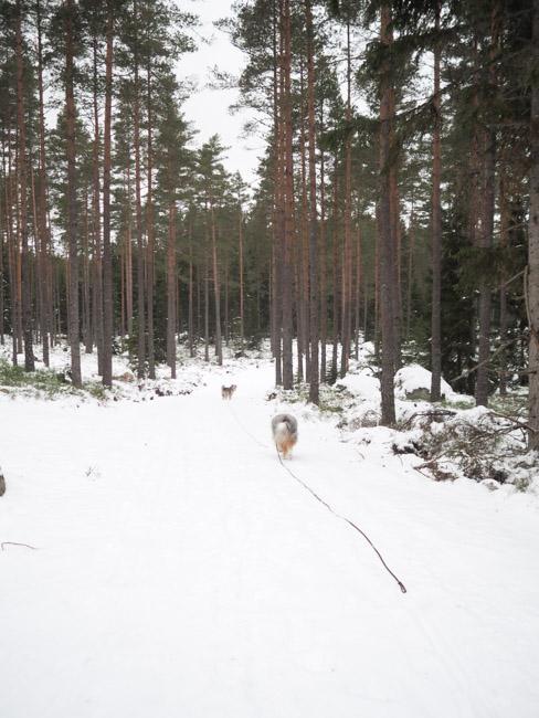 hundprom-34