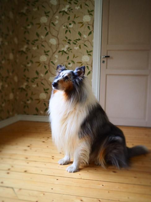 studiohund-69