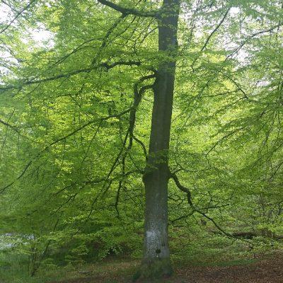 Bokarnas ljuvliga grönska
