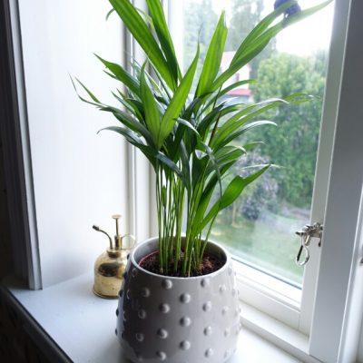 Mera växter