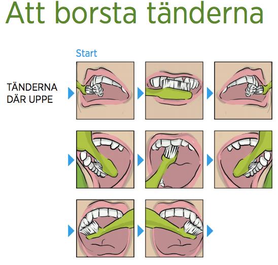 borsta_tanderna