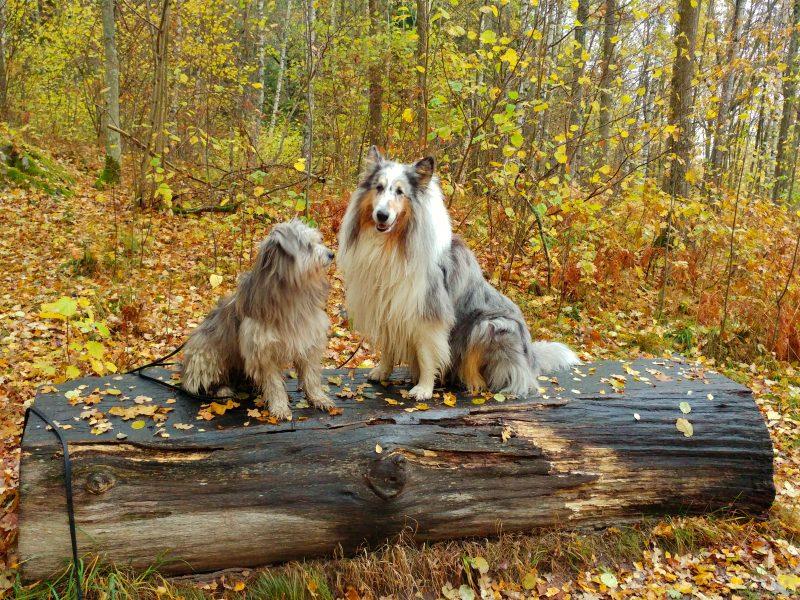 Hundarna på bänk