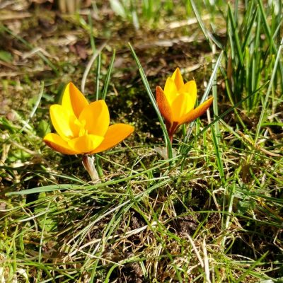 Vårkänslor på nytt