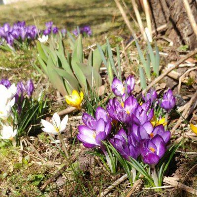 Våren?