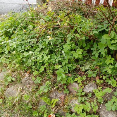 Lite trädgårdsskötsel