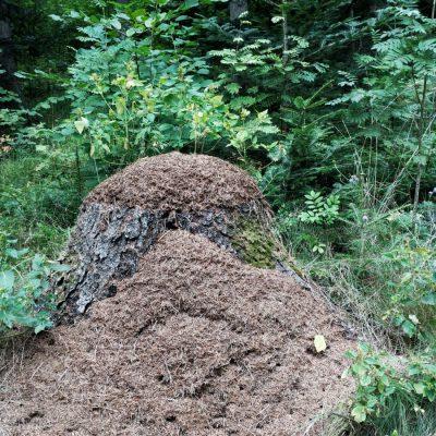 Höghus för myror