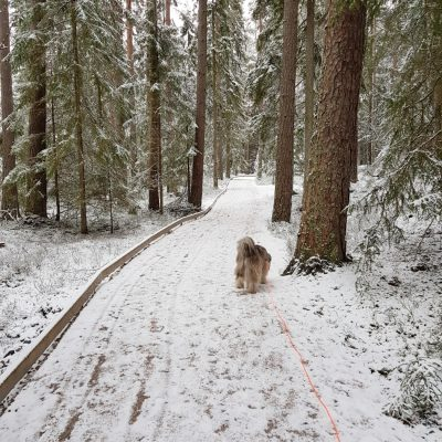 Vinter även i Småland