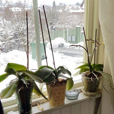 Ett orkidéhörn