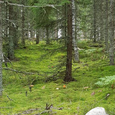 En sväng i skogen