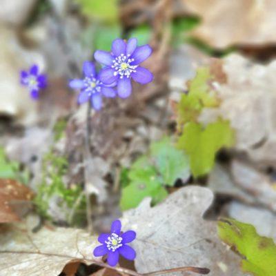 Nu pausar våren – igen