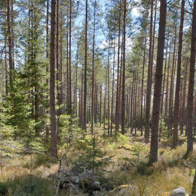 Fint väder och ut i skogen