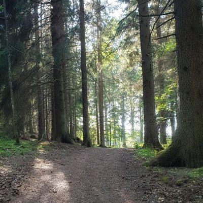 Svettas i skogen