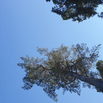 Att se på himlen